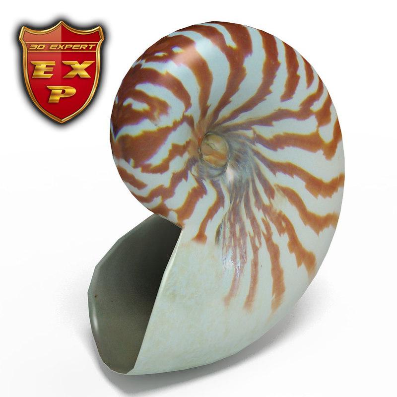 3d seashell nautilus