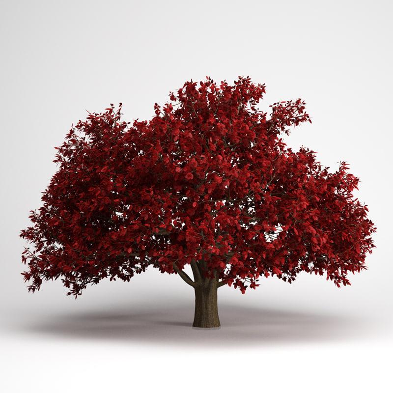 3d persian ironwood tree 11 model