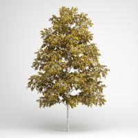 european white birch 19 max