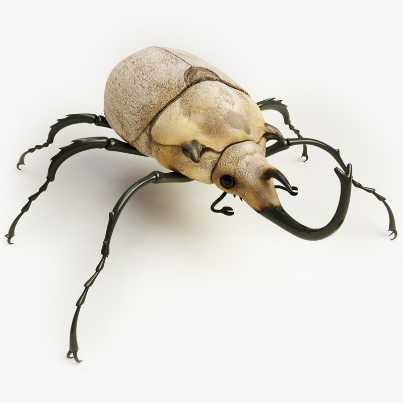 3d model elephant beetle