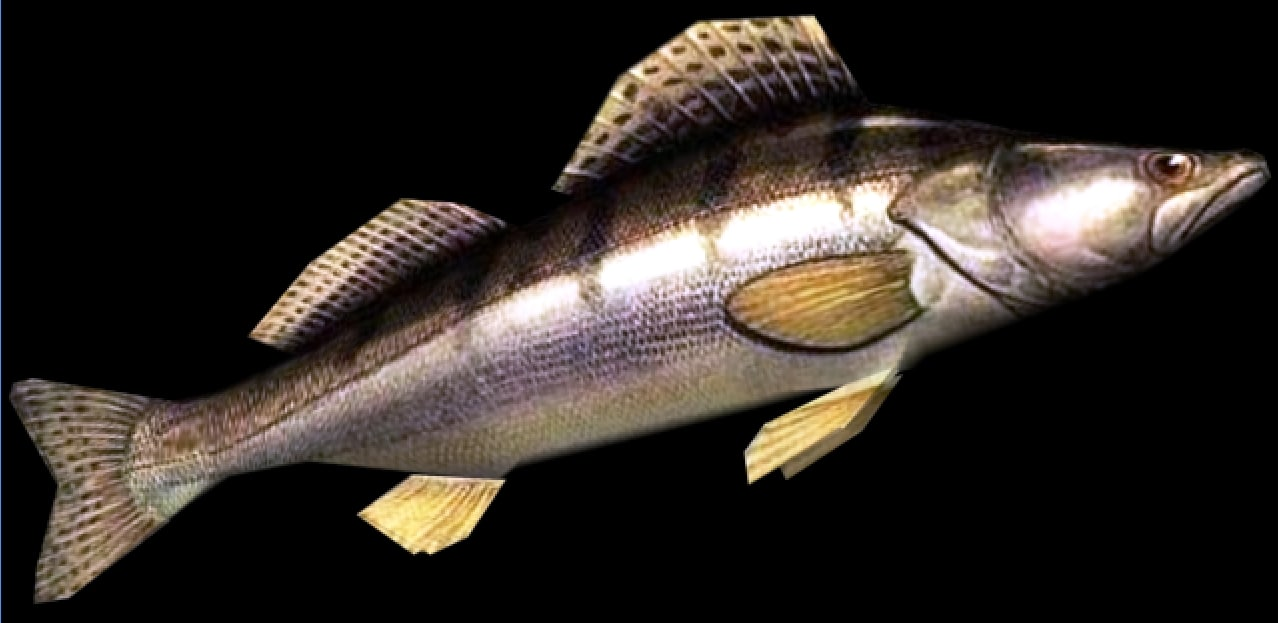 pike-perch 3ds