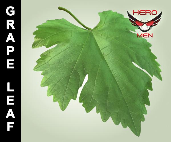 3d model of grape leaf