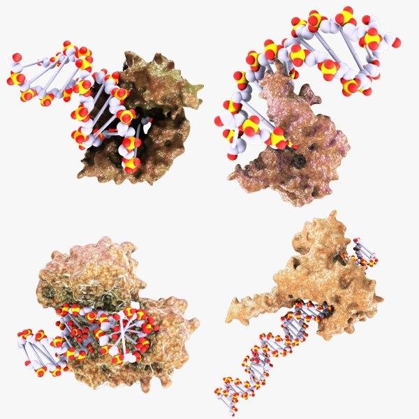 proteins dna replication 3d max