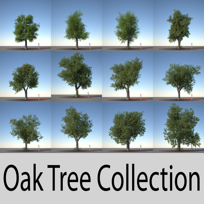 oak trees 3d obj