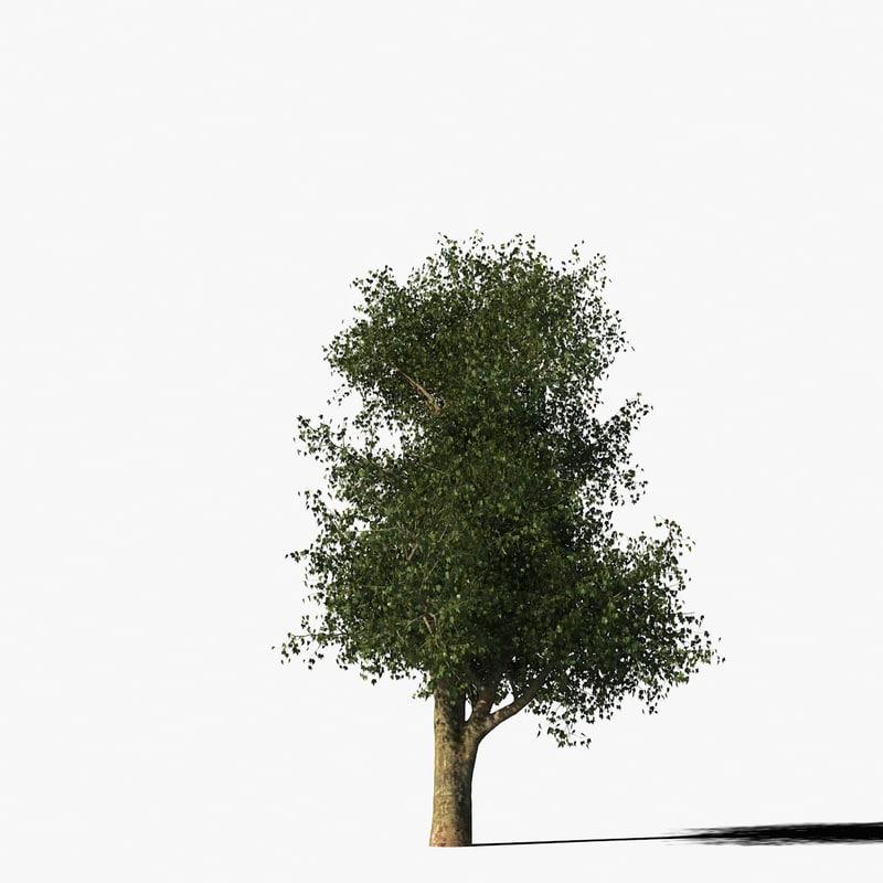 3d model platanus tree bark