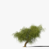 willow tree 3d max