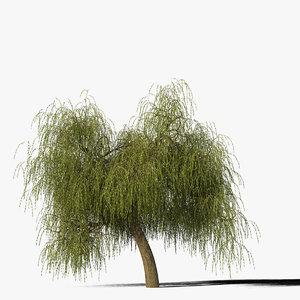 willow tree max