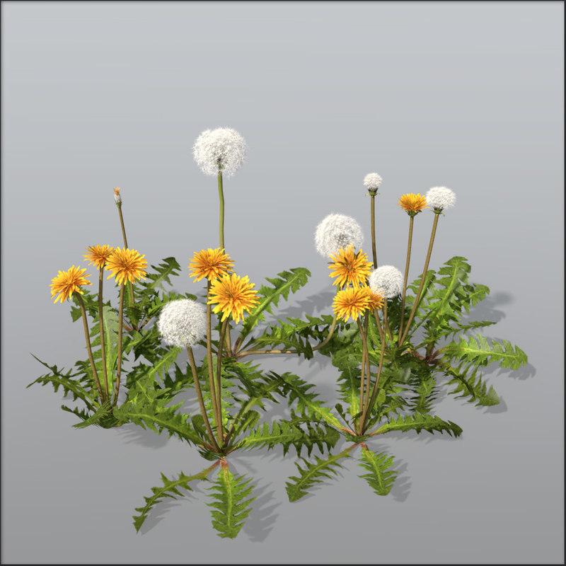 3d model dandelion blossom seeds