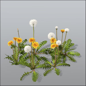3d model dandelion blossom seeds