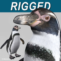 Penguin B