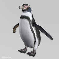 penguin humboldt max