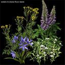 Wildflowers vol.1