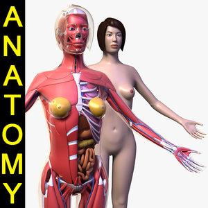 human female body anatomy 3d max