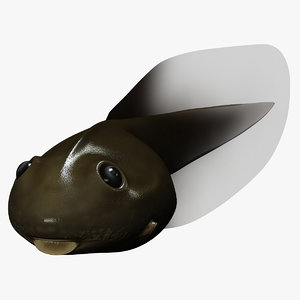 3ds max frog tadpole