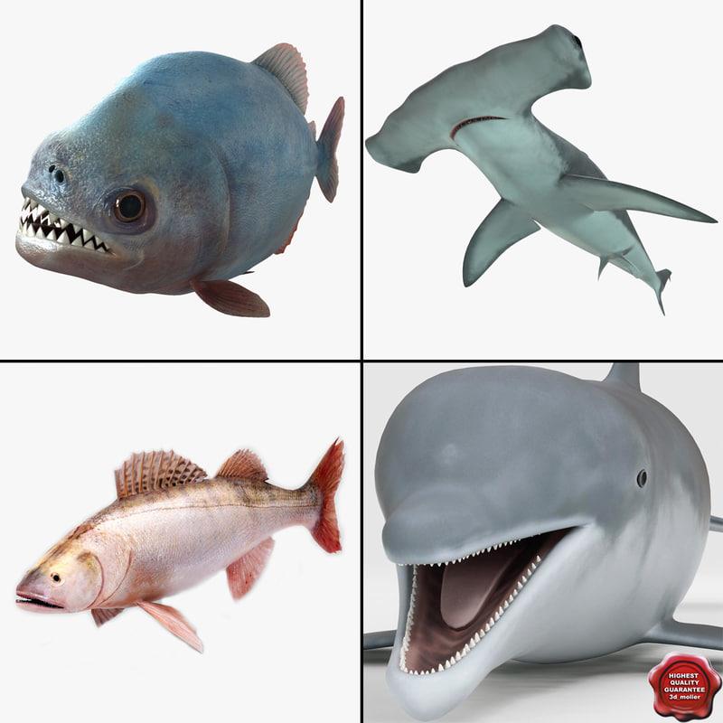 3d fishs v4 model
