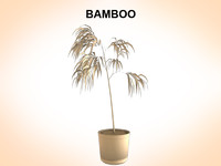 bamboo growing plants c4d