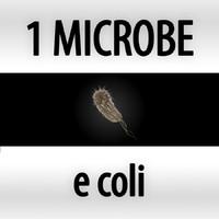 e coli - eshericia coli