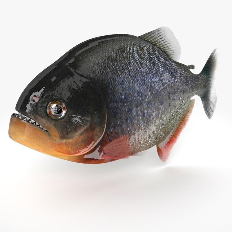 3d piranha fish piran piranya model