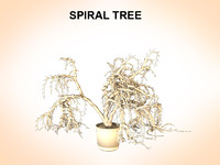 maya spiral tree