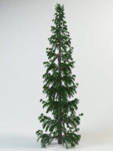 3d spruce fir