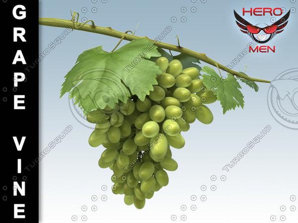 3d model grape vine