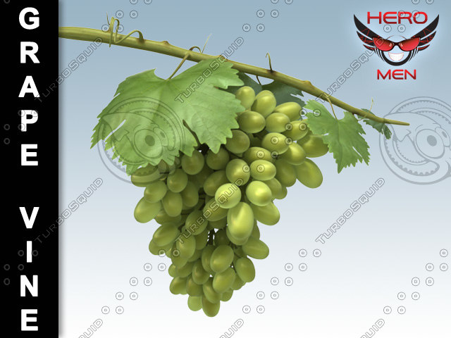 3d model grape vine