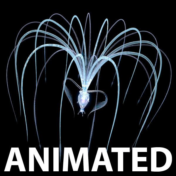 3d animation seed model