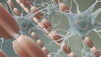 Myelin sheath micro glial nerves