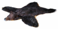3d model skin bear fur