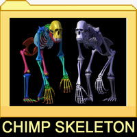 max chimp skeleton bones