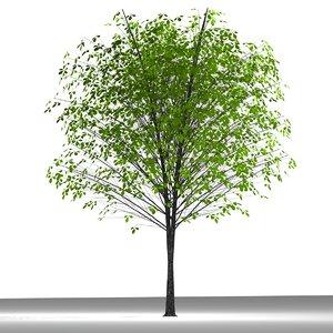 3d model plane tree