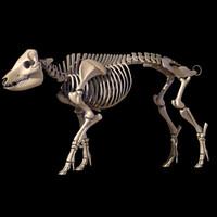 pig skeleton 3d model