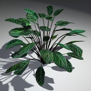 3d modeled calathea zebrina plant