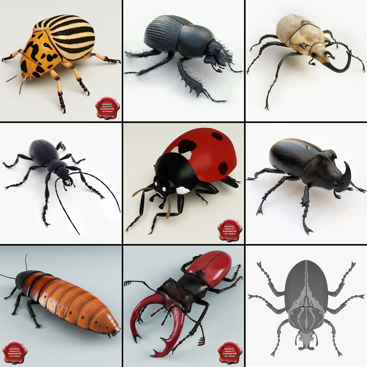 bugs set rhinoceros 3d 3ds