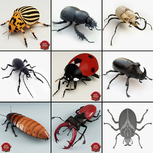 bugs set rhinoceros 3d 3ds
