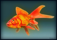 goldfish fish 3d model