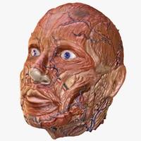 Human Head Muscles