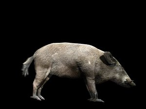 wild boar 3d 3ds
