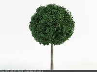3d model linden topiary tilia