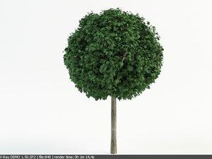 3d model linden topiary tilia