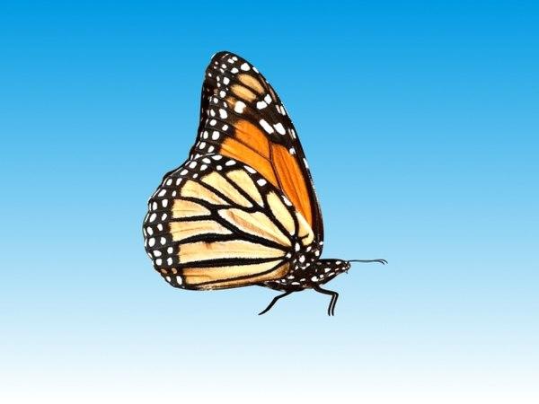 3d butterflies reveal object