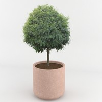 decorative pot plant 3d max