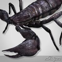 Scorpion Pandinus Imperator