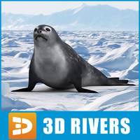Weddell seal by 3DRivers