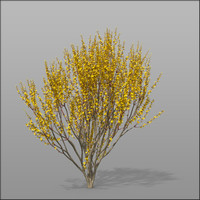 3d model forsythia shrubs ornamental