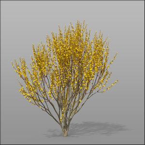 3d model forsythia shrubs ornamental