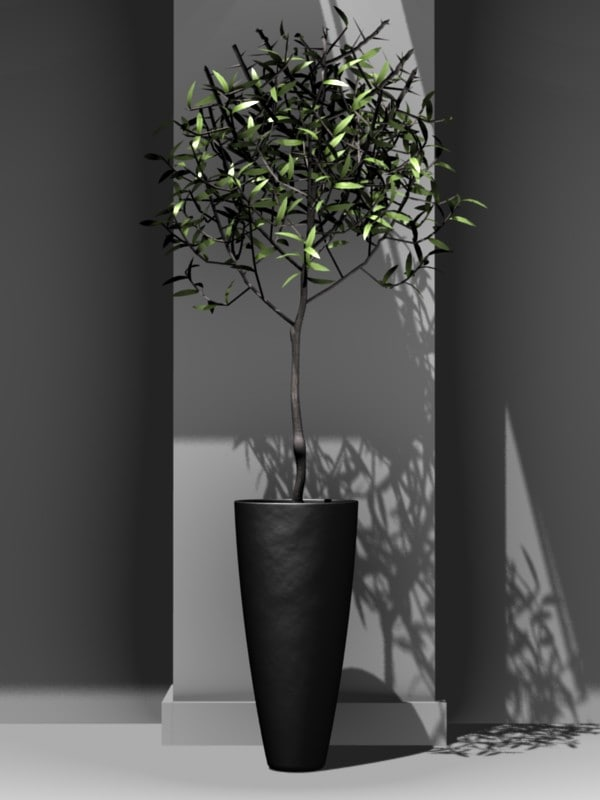 3ds ornamental olive tree