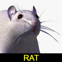 rat mouse animal 3d 3ds