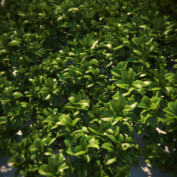 plant cover ground 3d model