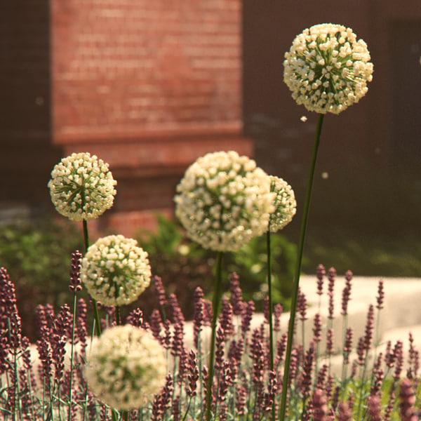 plant cover ground obj